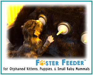 Wholeful-Pet-Foster-Feeder-
